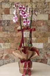 Pembe güller ve pembe bahar çiçekleriyle hazırlanan özel bukette sevdiklerinizi mutlu etme fırsatı sadece bir tık uzağınızda!