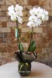 Sevdiklerinize yapacağınız sürprizlerin en güzeli onlara çiçek göndermektir. Çiçeklerden ise en güzeli beyaz orkide ona yakışır. Yaklaşık Ürün Boyutu : 60 cm